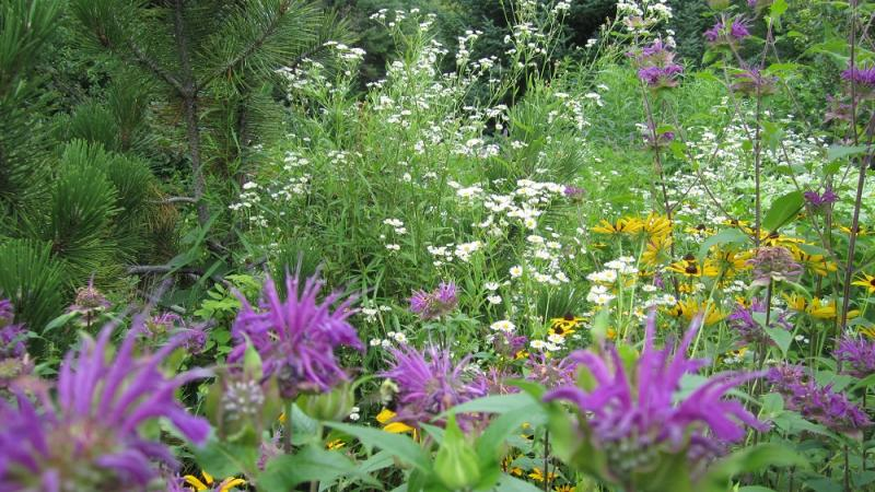 Using perennial plant combinations in the garden | PenBay ...